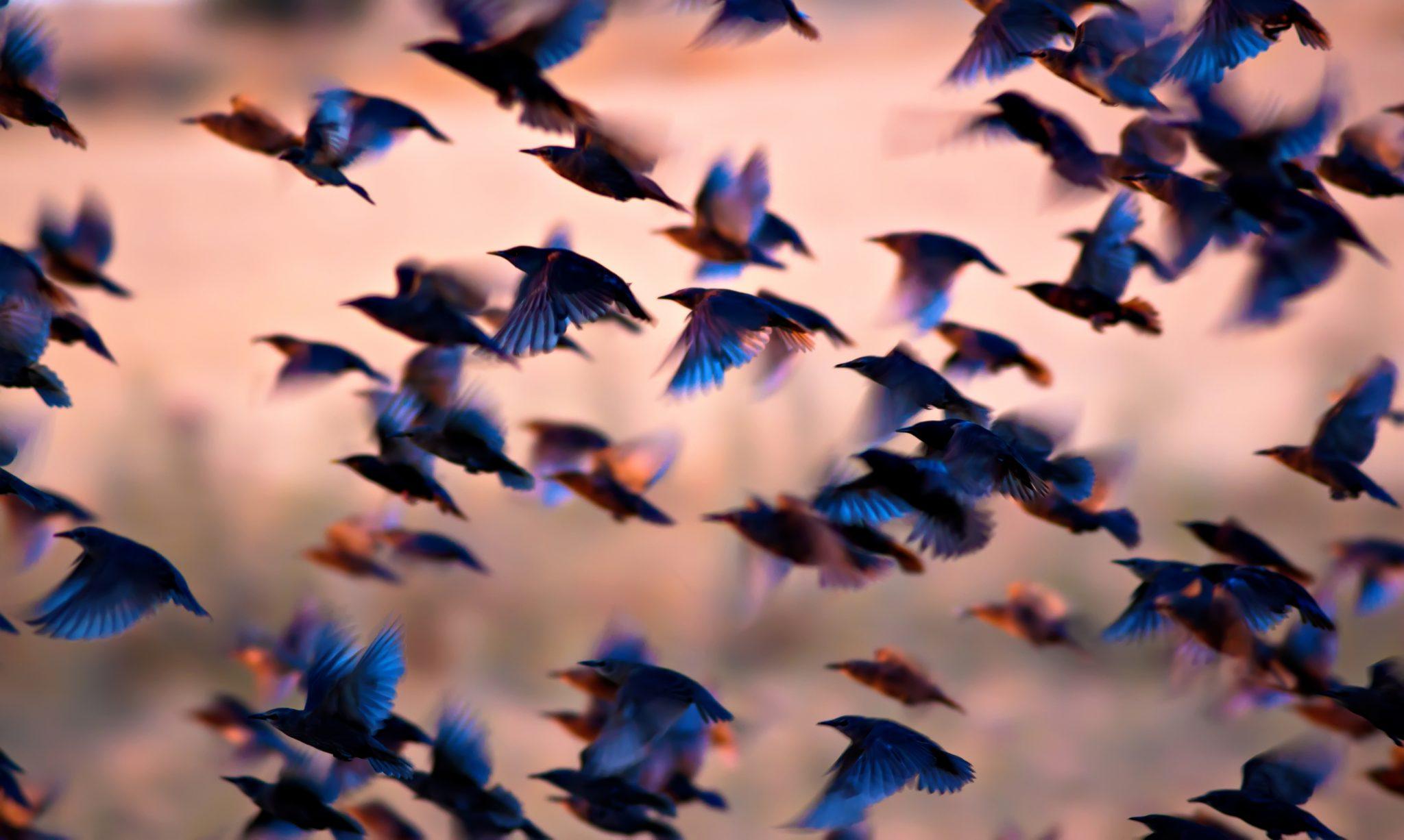 空で羽ばたく鳥と、空で羽ばたかない鳥