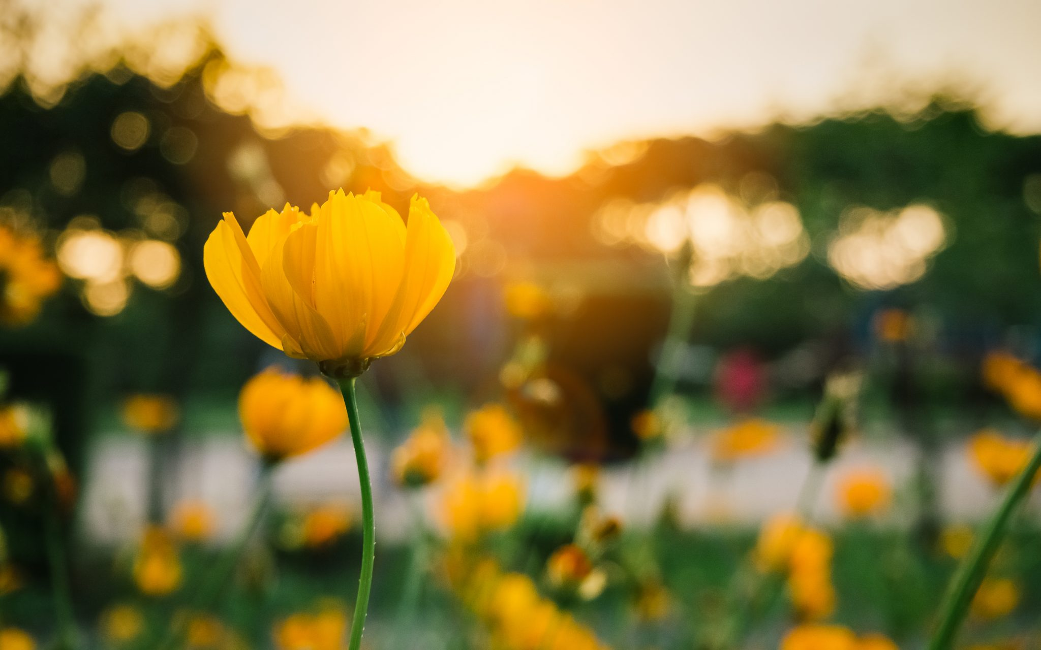 水をあげてもすぐに花は咲かない